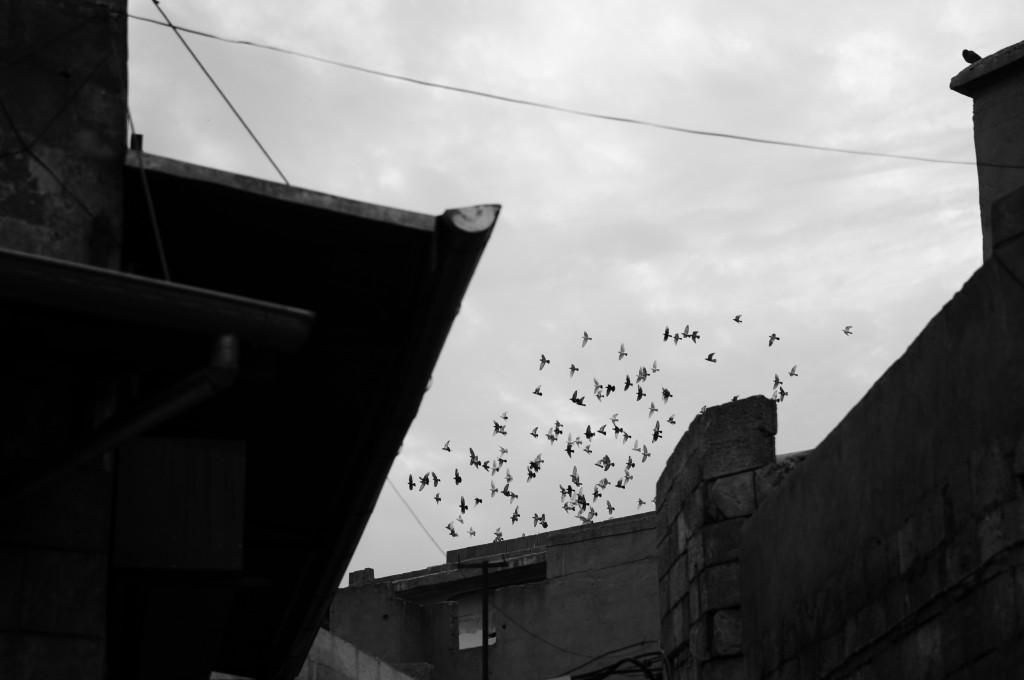 Urfa Kuşlar