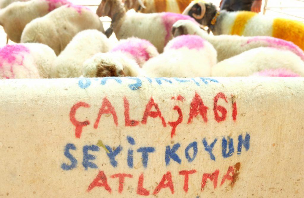 Cal-Asagiseyit-Koyun-Atlatma