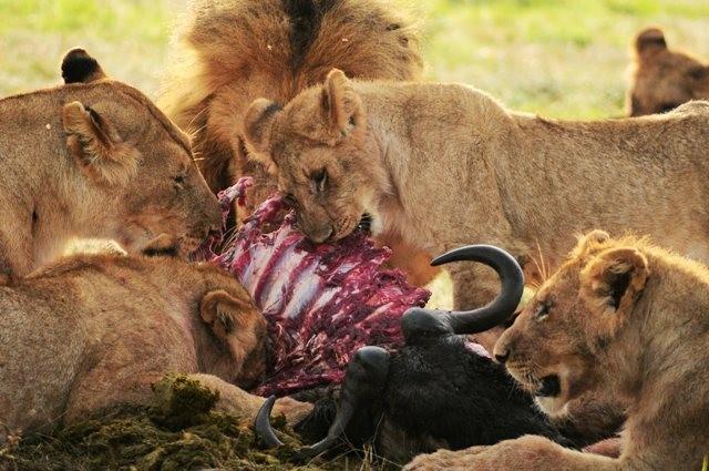 massaimara-kenya-africa-