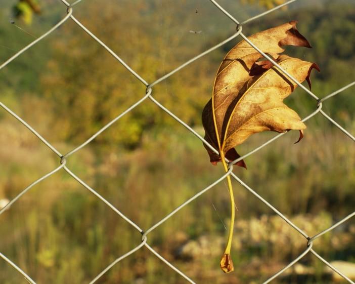 sarı-sonbahar