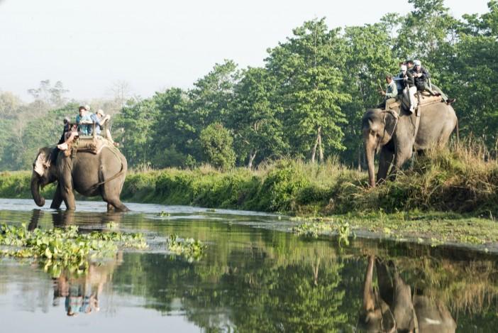 elephant-chitwan