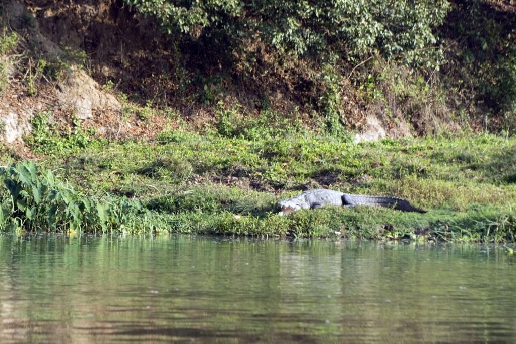 chitwan-cano-safari-nepal