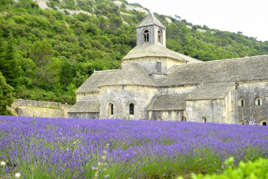 Fransa-Lavanta-Tarlalari
