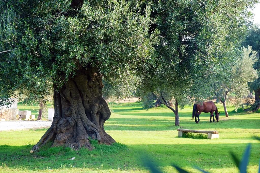 Puglia-ItriaValley-Masseria