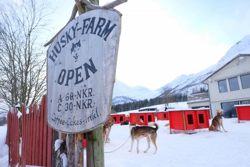Husky-Farm-Norway